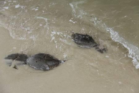 alligator-point-alligator-point-florida beach