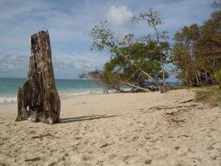 anse-corps-de-garde-sainte-luce-le-marin beach