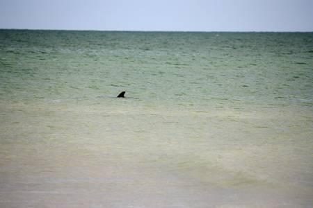 bowman's-beach-park-sanibel-florida beach