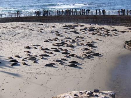 children's-pool-beach-san-diego-california beach