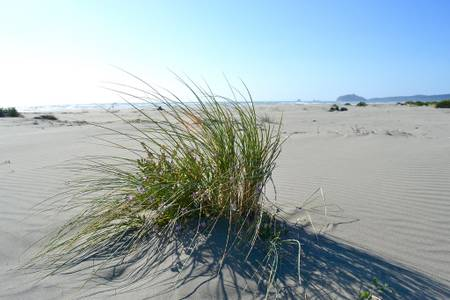 clam-beach-fort-ross-california beach