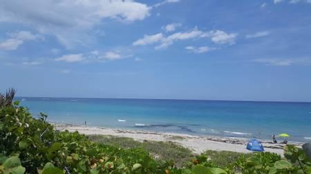 dog-beach-key-west-florida beach