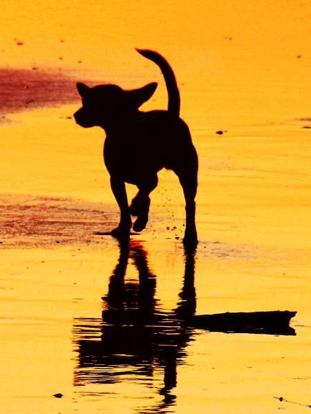 dog-beach-san-diego-california beach
