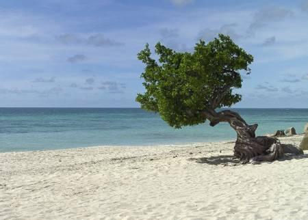 eagle-beach-oranjestad beach