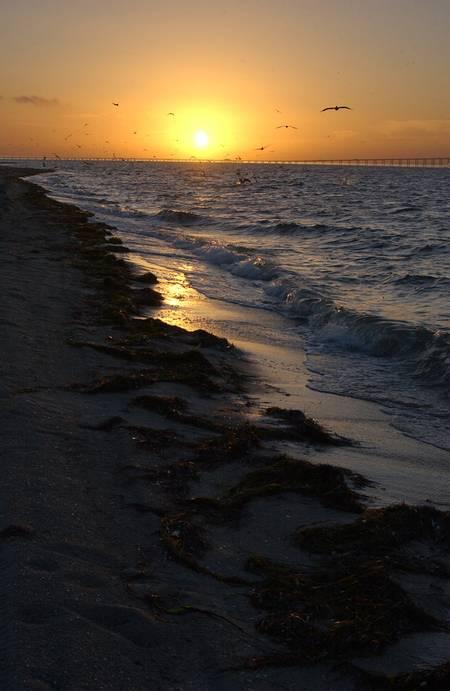 east-beach-st.-petersburg-florida beach