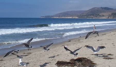 el-capitan-state-beach-capitan-california beach