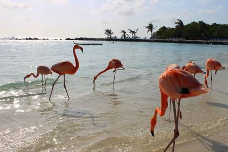 flamingo-beach-oranjestad beach