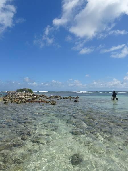 la-caravelle-sainte-anne-grande-terre beach