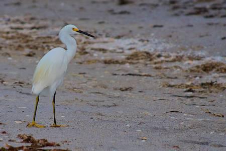 manasota-beach-englewood-florida beach