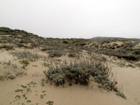 marina-state-beach-marina-del-rey-california beach