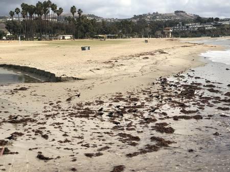 north-day-use-beach-dana-point-california beach