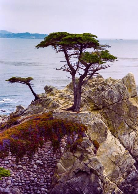 pebble-beach-inverness-california beach