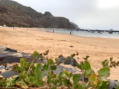 playa-de-las-teresitas-santa-cruz-de-tenerife beach