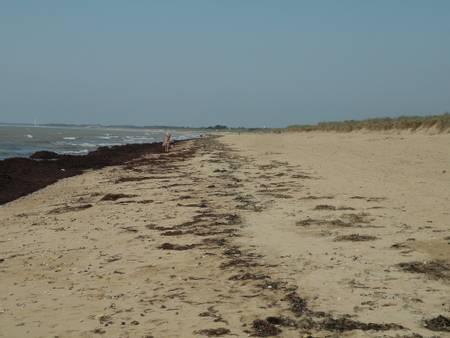 plage-de-la-braie-notre-dame-de-monts-pays-de-la-loire beach