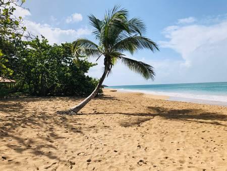 plage-de-la-perle-deshaies beach