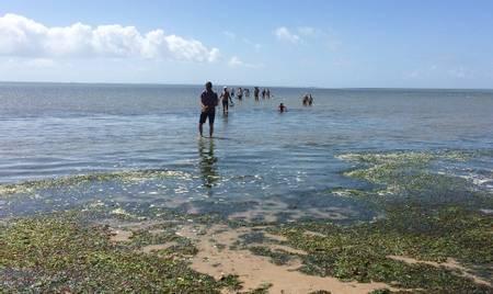 plage-du-pont-d'yeu-notre-dame-de-monts-pays-de-la-loire beach