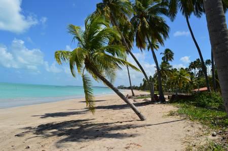 praia-peroba-maragogi-alagoas beach