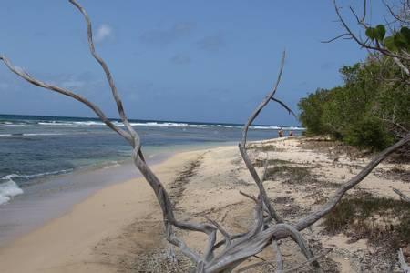 reef-bay-beach-cruz-bay-st.-john beach