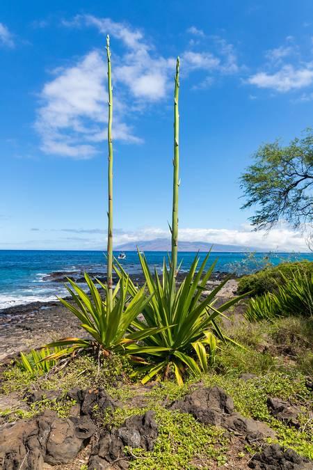 rocky-beach-wailea-makena-hawaii beach