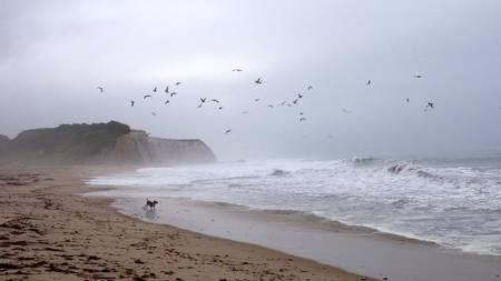 scott-creek-beach-davenport-california beach