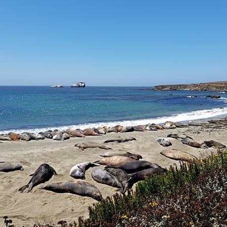 seal-rookery-sea-ranch-california beach